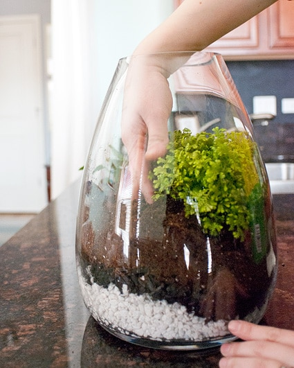 Terrarium in glass jar with hand inside the bowl