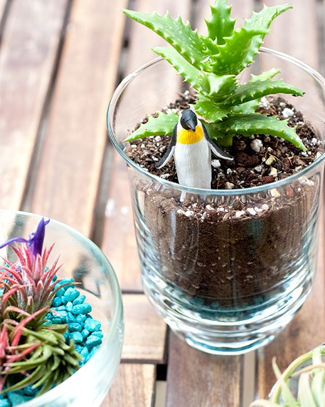 Easy Patio Plants And A Penguin Too Yellow Brick Home