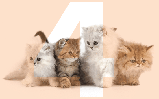 four-cats