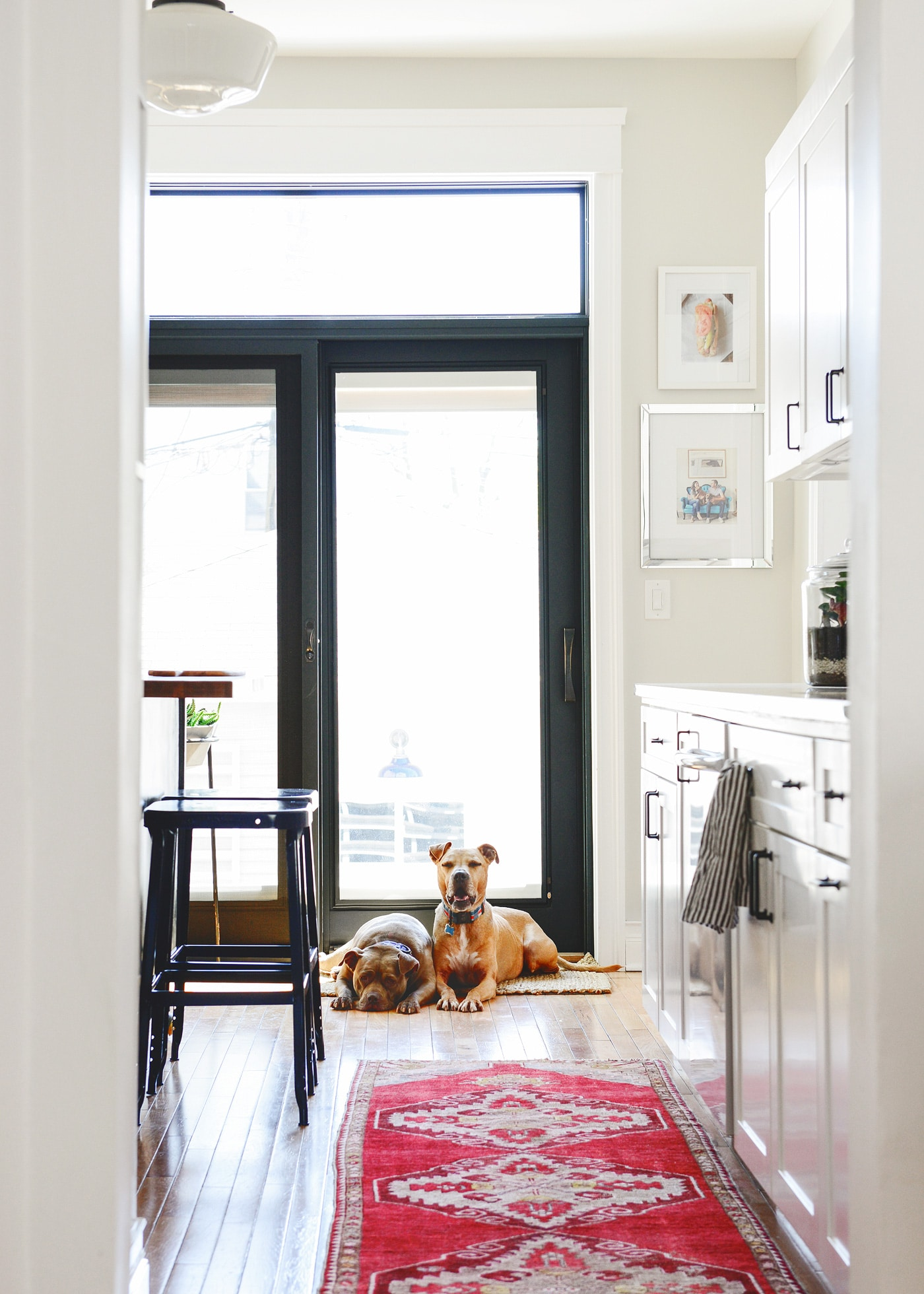 how we keep a mostly clean and healthy pet friendly home