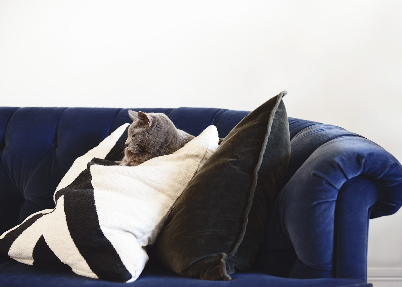 our favorite places to shop for pet friendly throw pillows