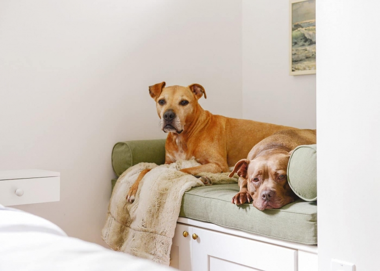 Tremendous How We Made A Dog Bed With Storage Yellow Brick Home Uwap Interior Chair Design Uwaporg