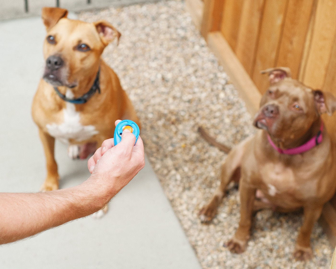 Training our dogs to use a pee pit / via Yellow Brick Home