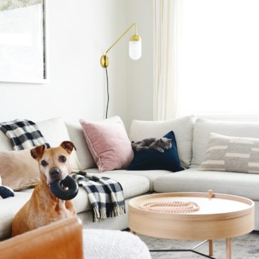 Pet supplies that look great in your home! // Attractive pet products // via Yellow Brick Home